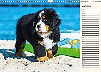Seebärchen entdecken die Welt - Berner Sennenhunde (Wandkalender 2019 DIN A3 quer) - Produktdetailbild 6