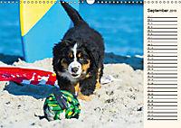 Seebärchen entdecken die Welt - Berner Sennenhunde (Wandkalender 2019 DIN A3 quer) - Produktdetailbild 9