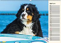 Seebärchen entdecken die Welt - Berner Sennenhunde (Wandkalender 2019 DIN A2 quer) - Produktdetailbild 4