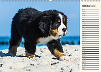 Seebärchen entdecken die Welt - Berner Sennenhunde (Wandkalender 2019 DIN A2 quer) - Produktdetailbild 10