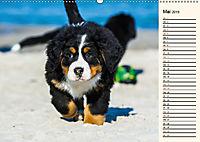 Seebärchen entdecken die Welt - Berner Sennenhunde (Wandkalender 2019 DIN A2 quer) - Produktdetailbild 5