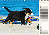 Seebärchen entdecken die Welt - Berner Sennenhunde (Wandkalender 2019 DIN A2 quer) - Produktdetailbild 3