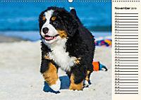 Seebärchen entdecken die Welt - Berner Sennenhunde (Wandkalender 2019 DIN A2 quer) - Produktdetailbild 11
