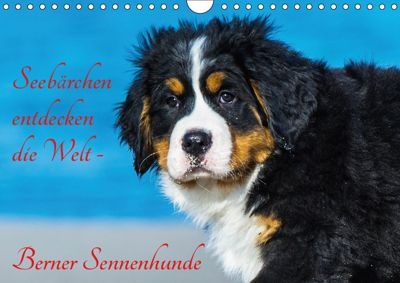 Seebärchen entdecken die Welt - Berner Sennenhunde (Wandkalender 2019 DIN A4 quer), Sigrid Starick