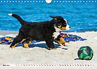 Seebärchen entdecken die Welt - Berner Sennenhunde (Wandkalender 2019 DIN A4 quer) - Produktdetailbild 3