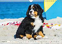 Seebärchen entdecken die Welt - Berner Sennenhunde (Wandkalender 2019 DIN A4 quer) - Produktdetailbild 8