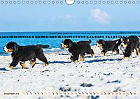 Seebärchen entdecken die Welt - Berner Sennenhunde (Wandkalender 2019 DIN A4 quer) - Produktdetailbild 12