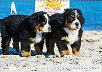 Seebärchen entdecken die Welt - Berner Sennenhunde (Wandkalender 2019 DIN A2 quer) - Produktdetailbild 7
