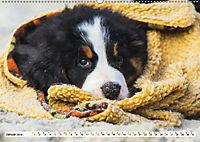 Seebärchen entdecken die Welt - Berner Sennenhunde (Wandkalender 2019 DIN A2 quer) - Produktdetailbild 1