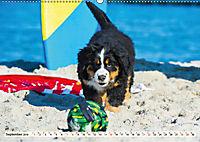 Seebärchen entdecken die Welt - Berner Sennenhunde (Wandkalender 2019 DIN A2 quer) - Produktdetailbild 9