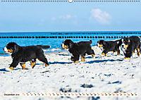 Seebärchen entdecken die Welt - Berner Sennenhunde (Wandkalender 2019 DIN A2 quer) - Produktdetailbild 12