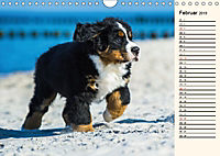 Seebärchen entdecken die Welt - Berner Sennenhunde (Wandkalender 2019 DIN A4 quer) - Produktdetailbild 2
