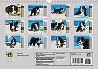 Seebärchen entdecken die Welt - Berner Sennenhunde (Wandkalender 2019 DIN A4 quer) - Produktdetailbild 13