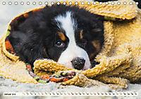 Seebärchen entdecken die Welt - Berner Sennenhunde (Tischkalender 2019 DIN A5 quer) - Produktdetailbild 1