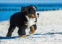 Seebärchen entdecken die Welt - Berner Sennenhunde (Tischkalender 2019 DIN A5 quer) - Produktdetailbild 2