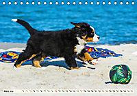 Seebärchen entdecken die Welt - Berner Sennenhunde (Tischkalender 2019 DIN A5 quer) - Produktdetailbild 3