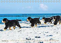 Seebärchen entdecken die Welt - Berner Sennenhunde (Tischkalender 2019 DIN A5 quer) - Produktdetailbild 12