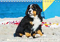Seebärchen entdecken die Welt - Berner Sennenhunde (Tischkalender 2019 DIN A5 quer) - Produktdetailbild 8