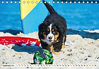 Seebärchen entdecken die Welt - Berner Sennenhunde (Tischkalender 2019 DIN A5 quer) - Produktdetailbild 9