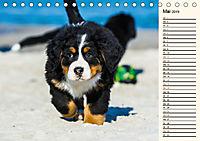 Seebärchen entdecken die Welt - Berner Sennenhunde (Tischkalender 2019 DIN A5 quer) - Produktdetailbild 5