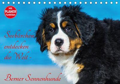 Seebärchen entdecken die Welt - Berner Sennenhunde (Tischkalender 2019 DIN A5 quer), Sigrid Starick