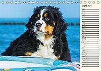 Seebärchen entdecken die Welt - Berner Sennenhunde (Tischkalender 2019 DIN A5 quer) - Produktdetailbild 4