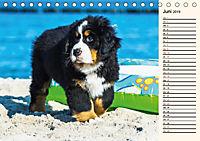 Seebärchen entdecken die Welt - Berner Sennenhunde (Tischkalender 2019 DIN A5 quer) - Produktdetailbild 6