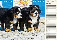 Seebärchen entdecken die Welt - Berner Sennenhunde (Tischkalender 2019 DIN A5 quer) - Produktdetailbild 7
