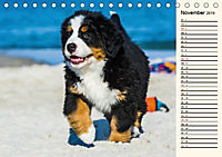 Seebärchen entdecken die Welt - Berner Sennenhunde (Tischkalender 2019 DIN A5 quer) - Produktdetailbild 11