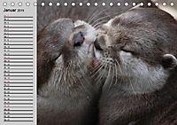 Seehunde und Otter. Putzige Gesellen, perfekte Schwimmer (Tischkalender 2019 DIN A5 quer) - Produktdetailbild 1