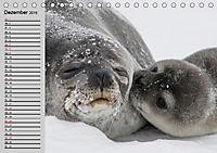Seehunde und Otter. Putzige Gesellen, perfekte Schwimmer (Tischkalender 2019 DIN A5 quer) - Produktdetailbild 6
