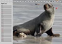Seehunde und Otter. Putzige Gesellen, perfekte Schwimmer (Tischkalender 2019 DIN A5 quer) - Produktdetailbild 7