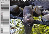 Seehunde und Otter. Putzige Gesellen, perfekte Schwimmer (Wandkalender 2019 DIN A4 quer) - Produktdetailbild 5