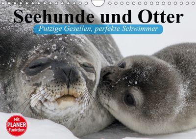 Seehunde und Otter. Putzige Gesellen, perfekte Schwimmer (Wandkalender 2019 DIN A4 quer), Elisabeth Stanzer