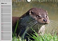 Seehunde und Otter. Putzige Gesellen, perfekte Schwimmer (Wandkalender 2019 DIN A4 quer) - Produktdetailbild 3