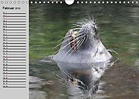 Seehunde und Otter. Putzige Gesellen, perfekte Schwimmer (Wandkalender 2019 DIN A4 quer) - Produktdetailbild 2