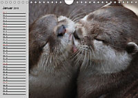 Seehunde und Otter. Putzige Gesellen, perfekte Schwimmer (Wandkalender 2019 DIN A4 quer) - Produktdetailbild 1