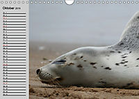 Seehunde und Otter. Putzige Gesellen, perfekte Schwimmer (Wandkalender 2019 DIN A4 quer) - Produktdetailbild 10
