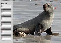 Seehunde und Otter. Putzige Gesellen, perfekte Schwimmer (Wandkalender 2019 DIN A2 quer) - Produktdetailbild 4