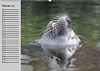 Seehunde und Otter. Putzige Gesellen, perfekte Schwimmer (Wandkalender 2019 DIN A2 quer) - Produktdetailbild 2