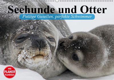 Seehunde und Otter. Putzige Gesellen, perfekte Schwimmer (Wandkalender 2019 DIN A2 quer), Elisabeth Stanzer