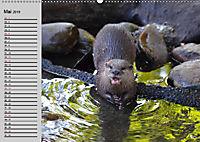 Seehunde und Otter. Putzige Gesellen, perfekte Schwimmer (Wandkalender 2019 DIN A2 quer) - Produktdetailbild 5