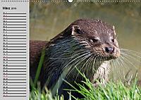 Seehunde und Otter. Putzige Gesellen, perfekte Schwimmer (Wandkalender 2019 DIN A2 quer) - Produktdetailbild 3