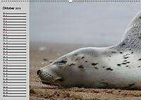 Seehunde und Otter. Putzige Gesellen, perfekte Schwimmer (Wandkalender 2019 DIN A2 quer) - Produktdetailbild 10