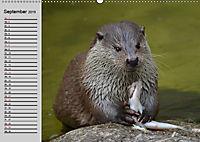 Seehunde und Otter. Putzige Gesellen, perfekte Schwimmer (Wandkalender 2019 DIN A2 quer) - Produktdetailbild 9