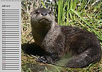 Seehunde und Otter. Putzige Gesellen, perfekte Schwimmer (Wandkalender 2019 DIN A2 quer) - Produktdetailbild 7