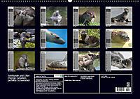 Seehunde und Otter. Putzige Gesellen, perfekte Schwimmer (Wandkalender 2019 DIN A2 quer) - Produktdetailbild 13