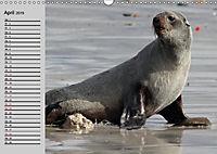 Seehunde und Otter. Putzige Gesellen, perfekte Schwimmer (Wandkalender 2019 DIN A3 quer) - Produktdetailbild 4