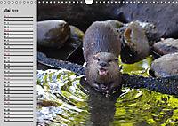 Seehunde und Otter. Putzige Gesellen, perfekte Schwimmer (Wandkalender 2019 DIN A3 quer) - Produktdetailbild 5