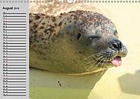 Seehunde und Otter. Putzige Gesellen, perfekte Schwimmer (Wandkalender 2019 DIN A3 quer) - Produktdetailbild 8